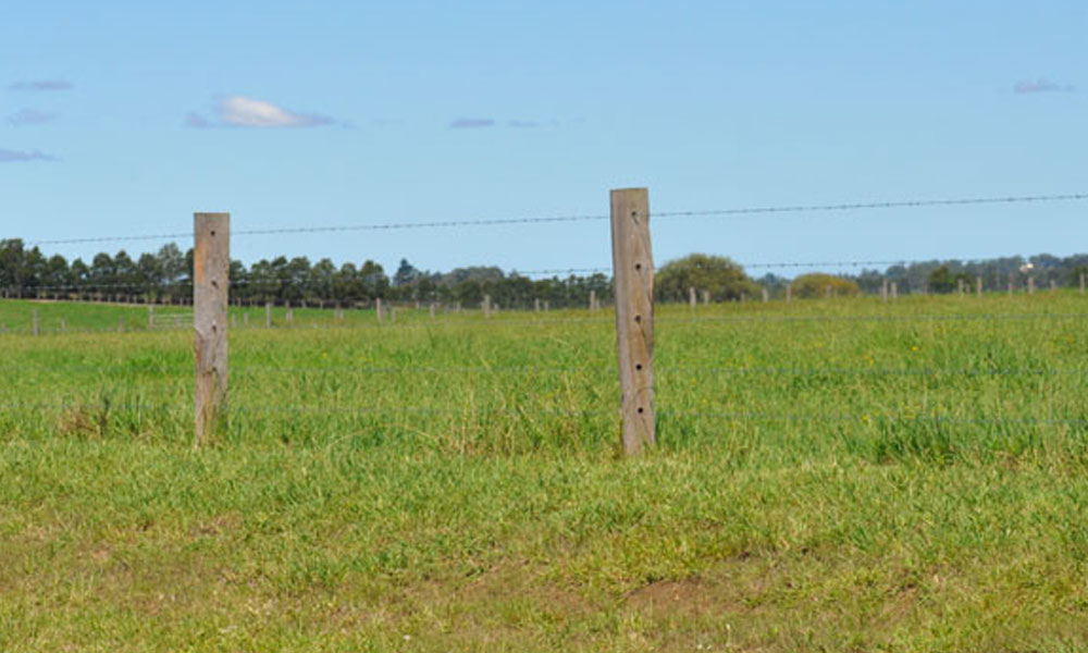 Barbed Wire Fencing 10