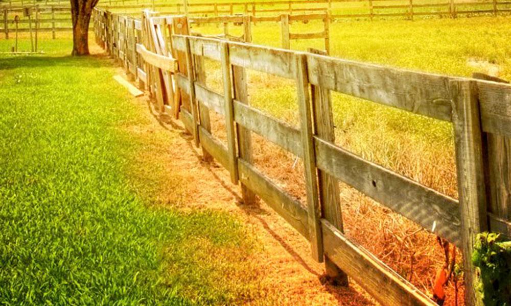 Farm Fencing 5