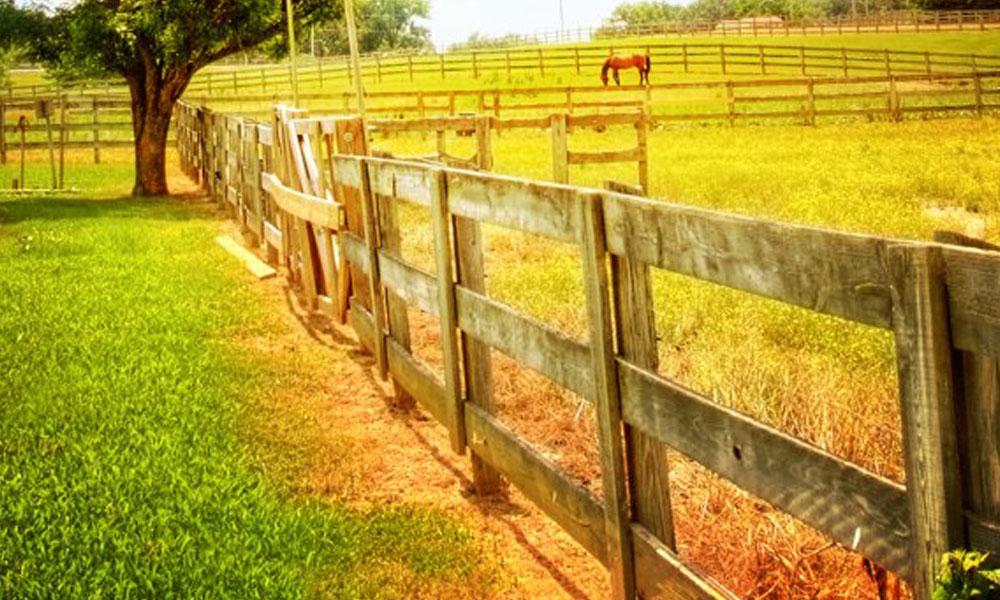 Rural Fencing 7
