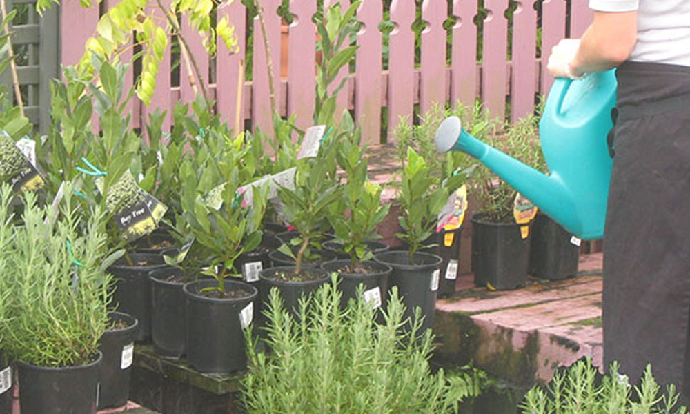 Garden Accessories, Machinery and Tools 5
