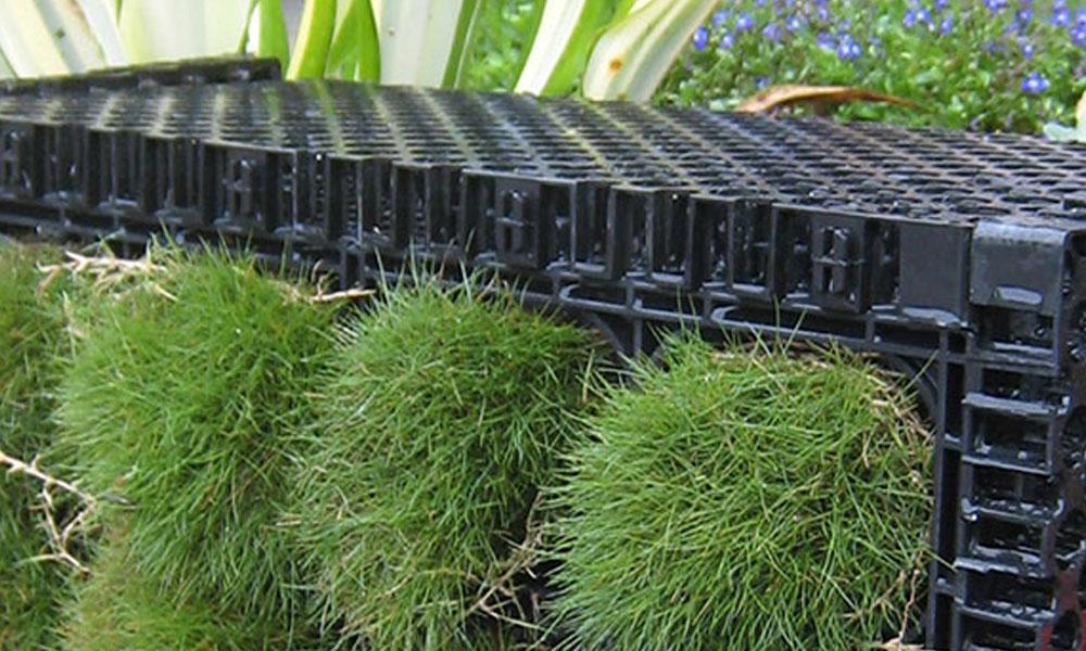 Indoor Planting 1
