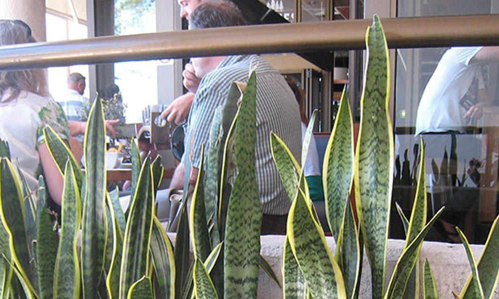 Indoor Planting 3