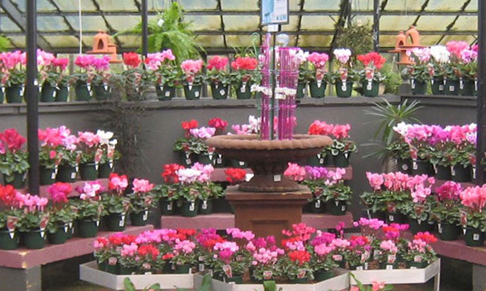 Indoor Planting 5