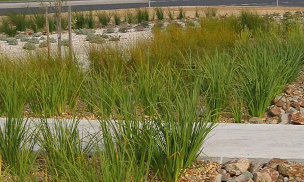 Landscaping Water Management and Drainage 6