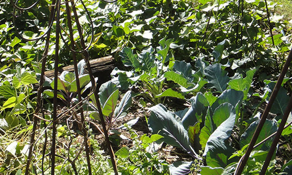 Permaculture 1