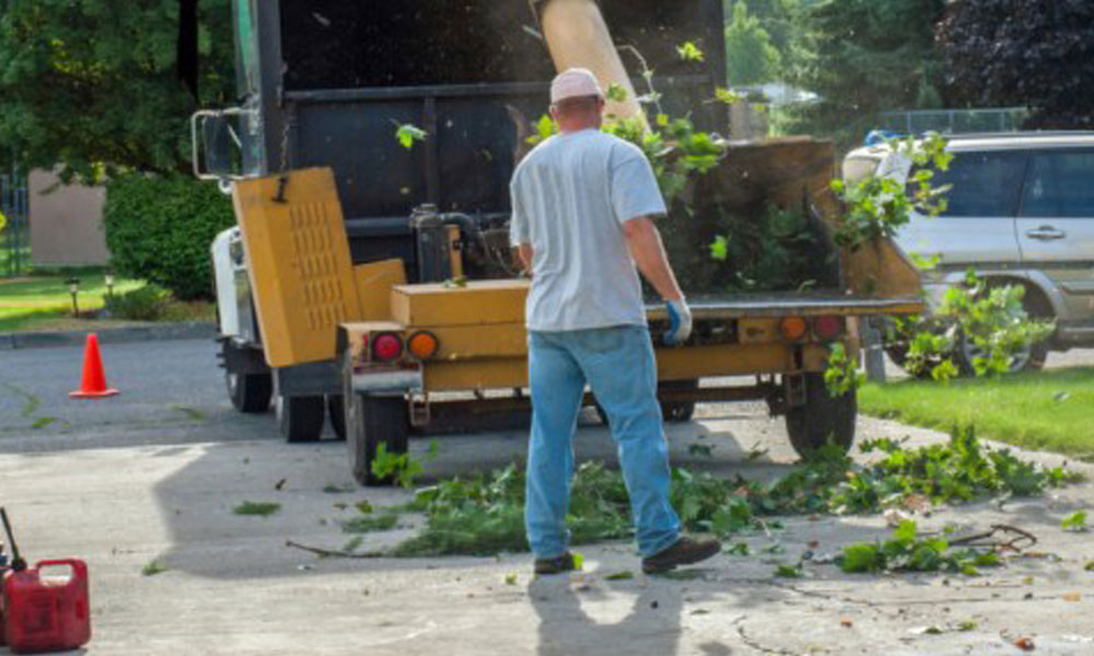 Tree Felling Services 2