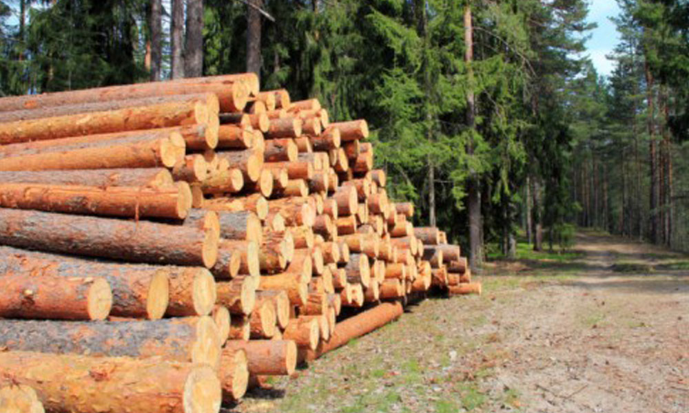 Tree Felling Services 4