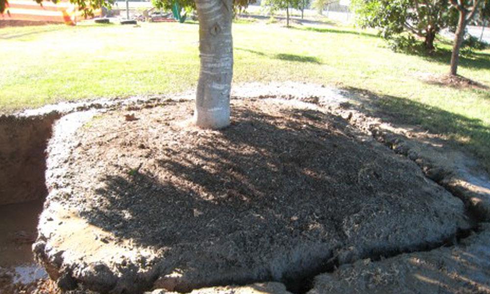 Tree Management Services 1