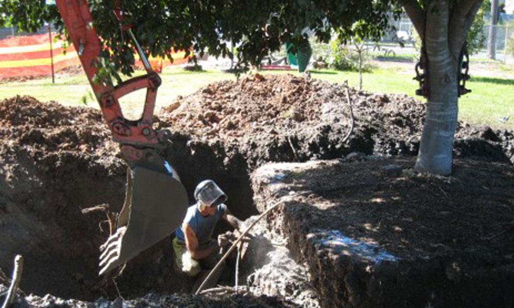 Tree Management Services 2