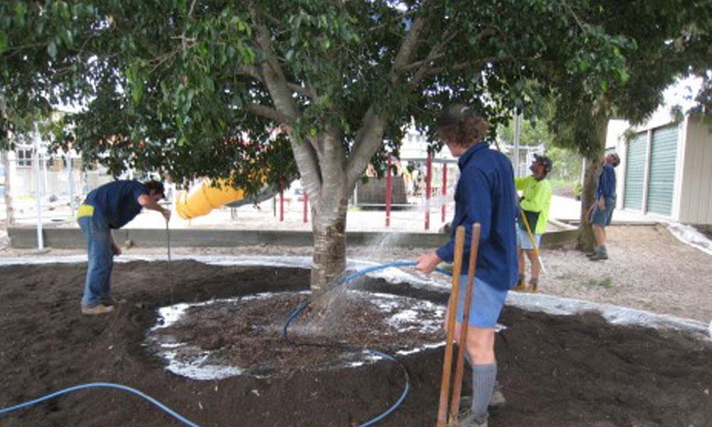 Tree Management Services 4