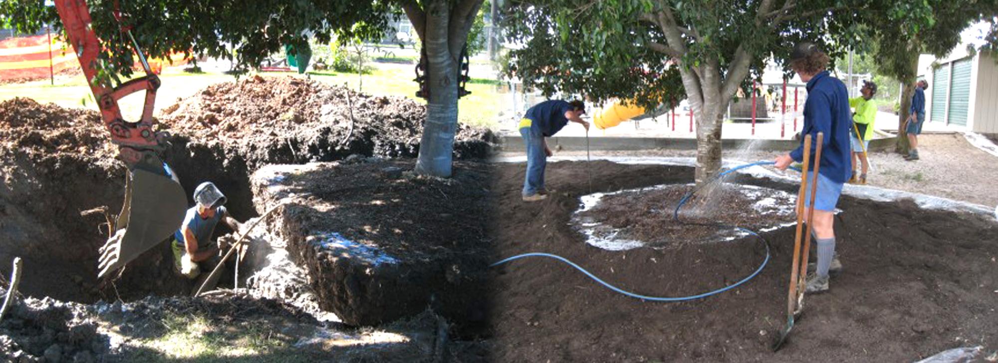 Tree Management Services